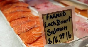 67408b739295926a_Target_stops_selling_farmed_salmon.preview